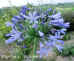 f:id:mikawakinta63:20190705154444j:plain