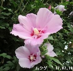 f:id:mikawakinta63:20190729141454j:plain