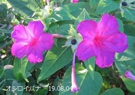 f:id:mikawakinta63:20190805162331j:plain