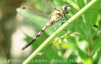 f:id:mikawakinta63:20190809140627j:plain