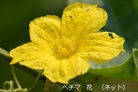 f:id:mikawakinta63:20190812134558p:plain