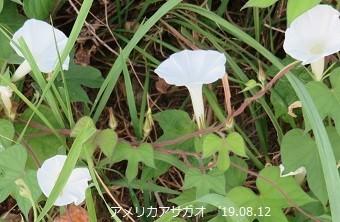 f:id:mikawakinta63:20190813154043j:plain