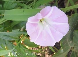 f:id:mikawakinta63:20190813154119j:plain