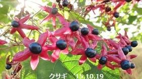 f:id:mikawakinta63:20190816151535j:plain