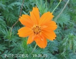 f:id:mikawakinta63:20190816153518j:plain