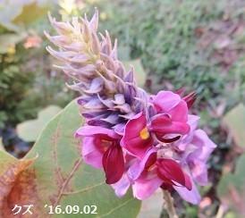 f:id:mikawakinta63:20190816162309j:plain
