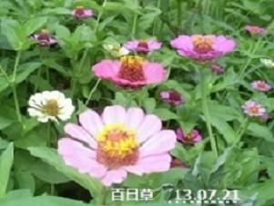 f:id:mikawakinta63:20190819103314j:plain