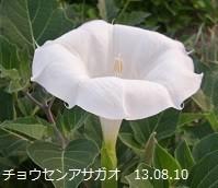 f:id:mikawakinta63:20190821145037j:plain