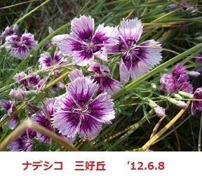 f:id:mikawakinta63:20190823152059j:plain