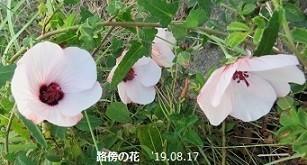 f:id:mikawakinta63:20190823155006j:plain