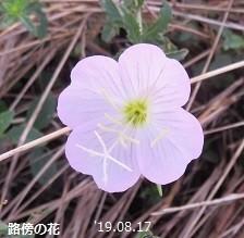 f:id:mikawakinta63:20190823155021j:plain
