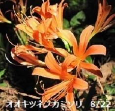f:id:mikawakinta63:20190830130434j:plain