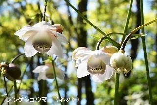f:id:mikawakinta63:20190904161802j:plain