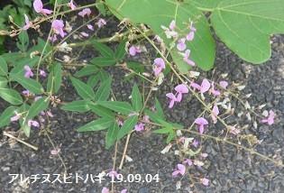 f:id:mikawakinta63:20190906133845j:plain