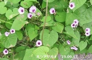 f:id:mikawakinta63:20190916142444j:plain