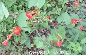 f:id:mikawakinta63:20190916142522j:plain