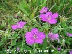 f:id:mikawakinta63:20190918213118j:plain