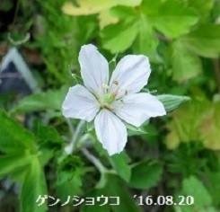 f:id:mikawakinta63:20190918213153j:plain