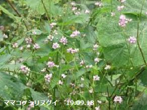 f:id:mikawakinta63:20190918213821p:plain