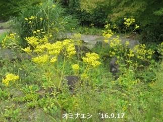f:id:mikawakinta63:20190920164008j:plain