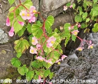 f:id:mikawakinta63:20190926210254j:plain