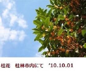 f:id:mikawakinta63:20191002151018j:plain