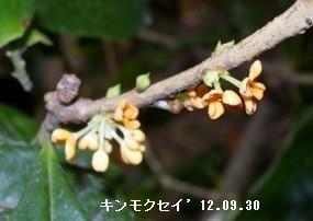 f:id:mikawakinta63:20191002151338j:plain