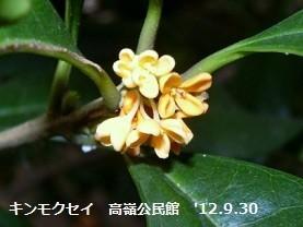 f:id:mikawakinta63:20191002151355j:plain
