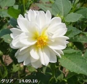 f:id:mikawakinta63:20191011202807j:plain