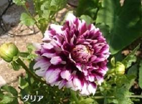 f:id:mikawakinta63:20191011203717j:plain