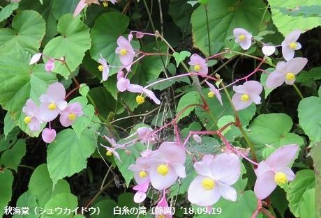 f:id:mikawakinta63:20191014153414j:plain