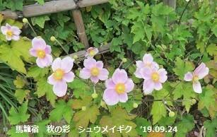 f:id:mikawakinta63:20191014153428j:plain
