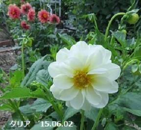 f:id:mikawakinta63:20191014162806j:plain