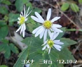 f:id:mikawakinta63:20191028140822j:plain