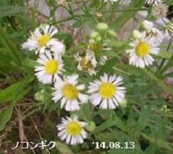 f:id:mikawakinta63:20191028140842j:plain
