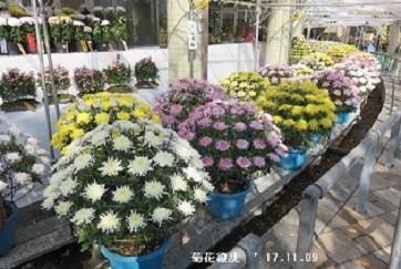 f:id:mikawakinta63:20191104144027j:plain