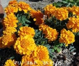 f:id:mikawakinta63:20191106165319j:plain