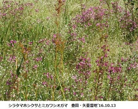 f:id:mikawakinta63:20191108143111j:plain