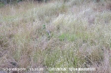 f:id:mikawakinta63:20191108150223j:plain
