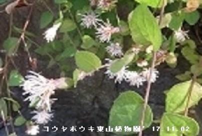 f:id:mikawakinta63:20191111172115j:plain