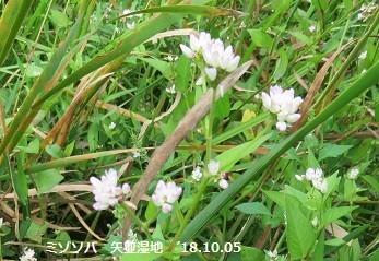 f:id:mikawakinta63:20191115194054j:plain