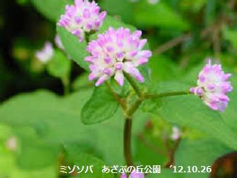 f:id:mikawakinta63:20191115194118p:plain