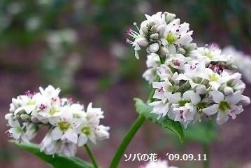 f:id:mikawakinta63:20191115194639j:plain