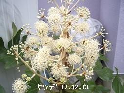 f:id:mikawakinta63:20191216105713j:plain