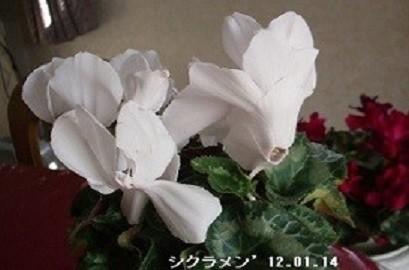 f:id:mikawakinta63:20191220141150j:plain