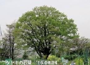 f:id:mikawakinta63:20191223155720j:plain