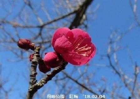f:id:mikawakinta63:20200207161117j:plain