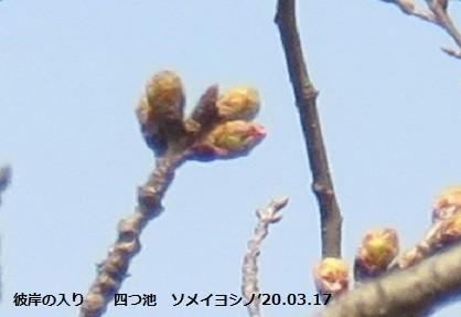 f:id:mikawakinta63:20200320162846j:plain