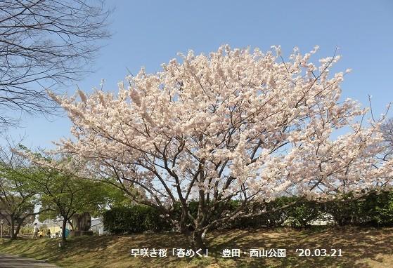 f:id:mikawakinta63:20200321205307j:plain