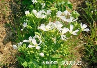 f:id:mikawakinta63:20200321205754j:plain